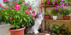 Idealne rośliny na wakacyjny taras