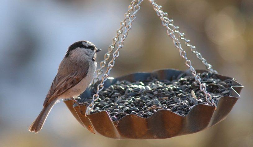 Ciekawe pomysły na karmnik dla ptaków