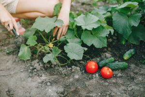 Robimy warzywniak, krok po kroku