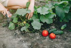 Robimy warzywniak – krok po kroku