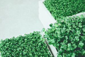 Uprawa warzyw w skrzyniach - zrób to sam!