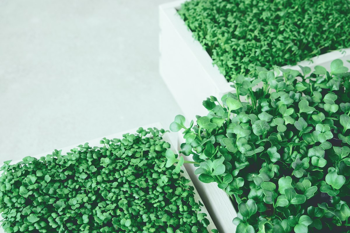 Uprawa warzyw w skrzyniach – zrób to sam!