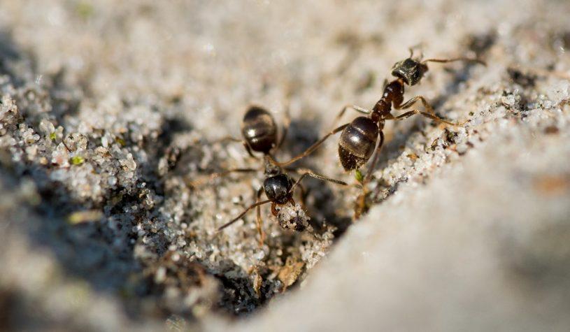 Domowe sposoby na mrówki w ogrodzie