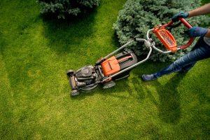 Jak i kiedy należy kosić trawnik?