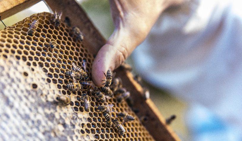Jak zrobić domek dla pszczół?