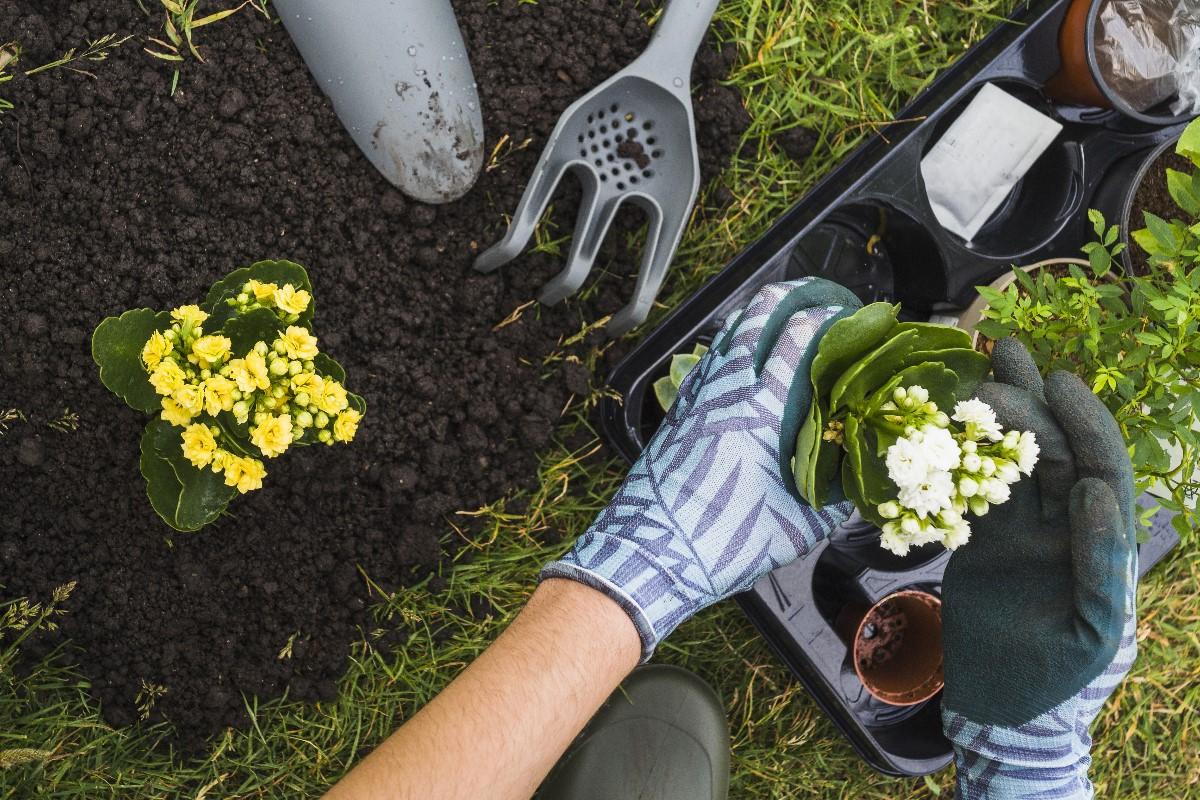 Co robić wiosną w ogrodzie?
