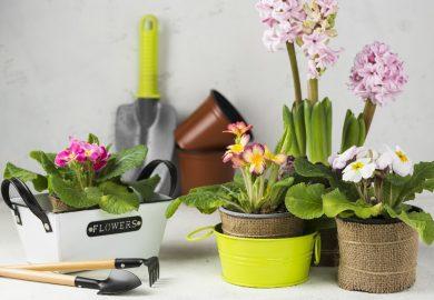 TOP 10 wiosennych kwiatów cebulowych