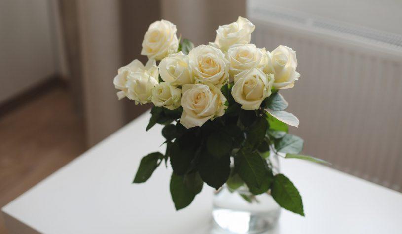 Jak przedłużyć żywotność róż?