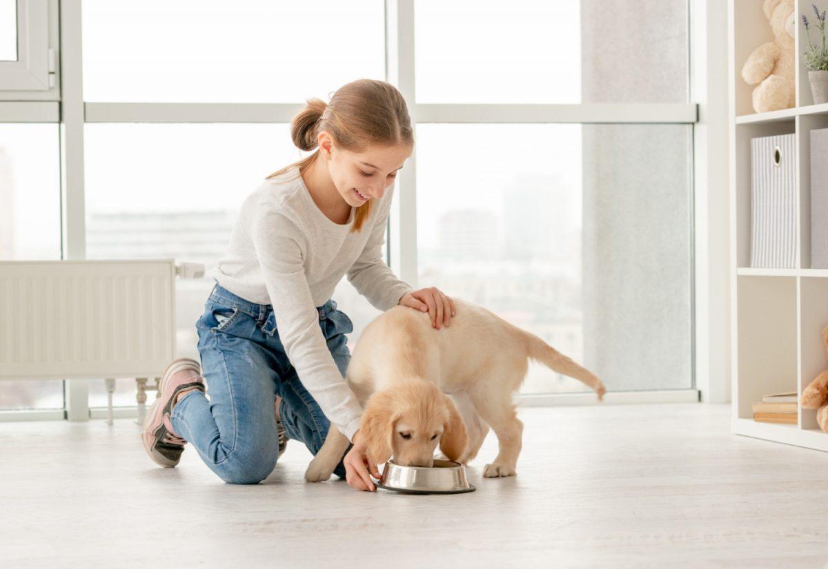 Pies – nowy członek rodziny w domu