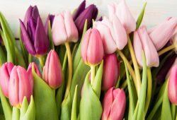 Tulipany silikonowe – jakie wyjątkowe dekoracje DIY można z nich zrobić?