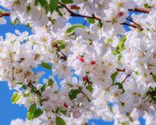 Jak przycinać drzewa owocowe? Solidny poradnik